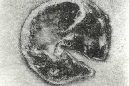 食人集铜版 (6)